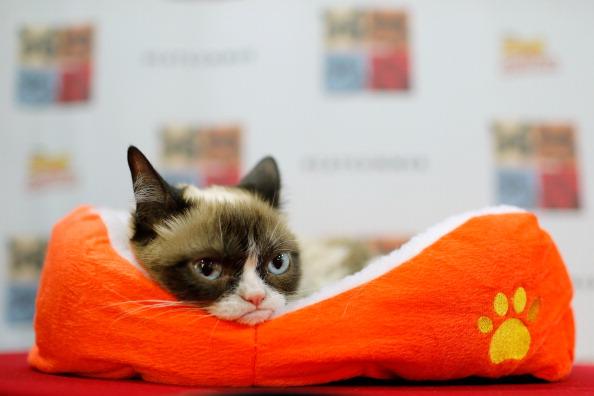 Grumpy Cat is Building a Media Empire