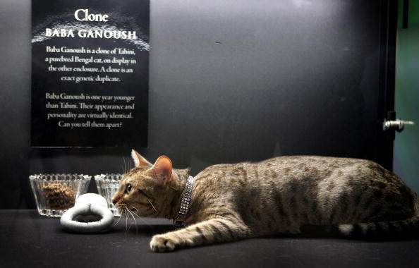 New Report Shows We Have Decoded Cats Genes