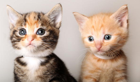 Five Myths About Kittens You Shouldn't Believe