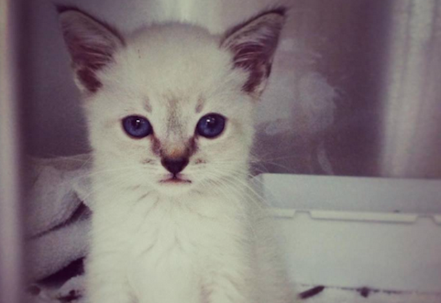 The Incredible Story of Cassidy The Kitty Who Died of Manx Syndrome
