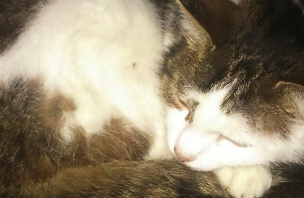 Sophie the Cat is Found After Missing for Five Years