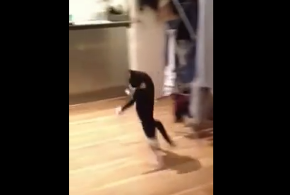 Check out Mr  Bouncy Cat: The Cat that Hops on Two Legs