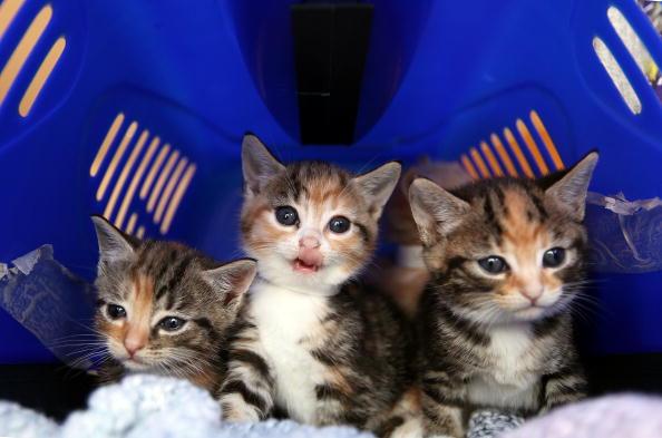 The Cutest Munchkin Cat Videos of 2014