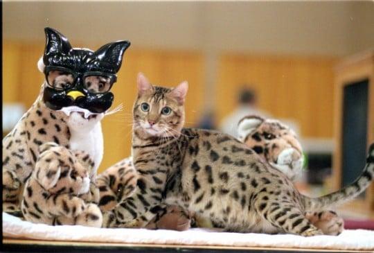 safe flea shampoo for cats
