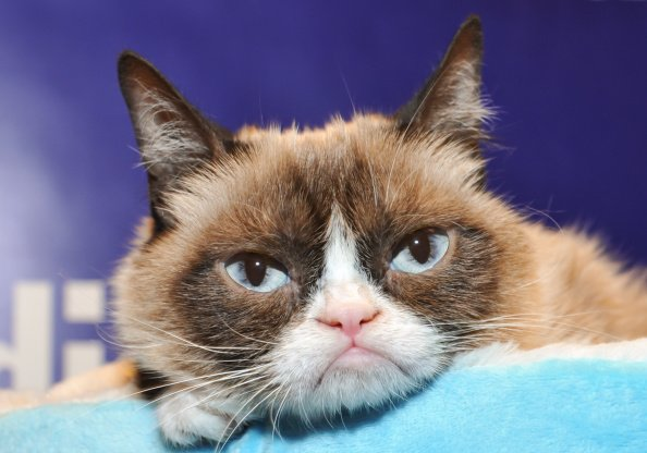 10 of the Best Grumpy Cat Moments