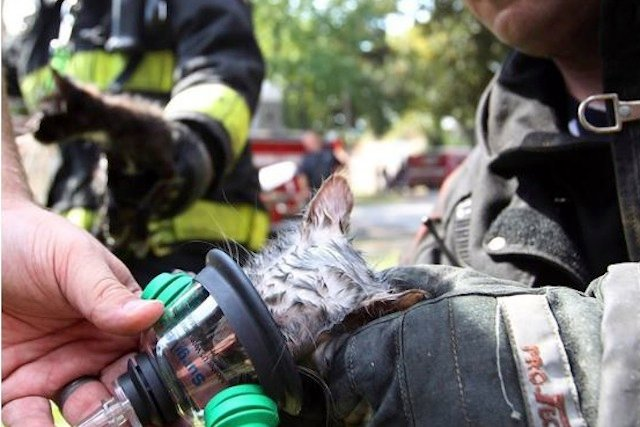 Firefighters Saving Kittens Provides One of the Best Rescue Pics of the Year