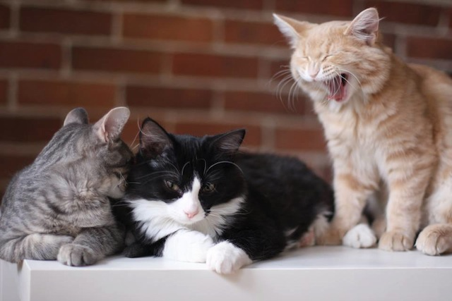 New Cat Cafe Opens in Montreal