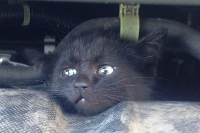 Kitten is Rescued from a Car and Finds a Home