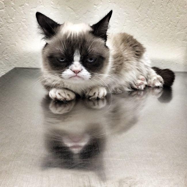 The 20 Funniest Grumpy Cat Tweets of 2014