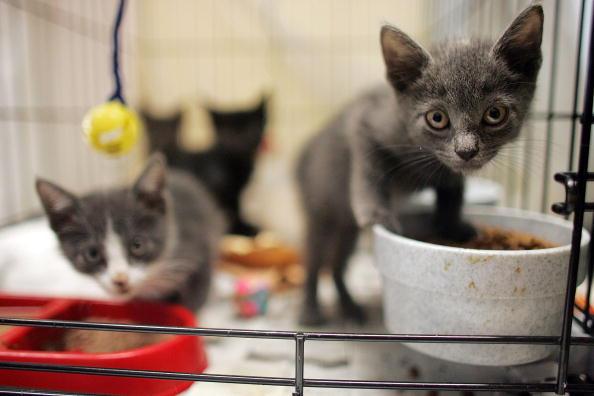 kitten-food
