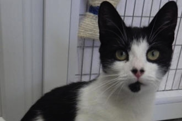 Cat That was Thrown from a Moving Car is Lucky to be Alive