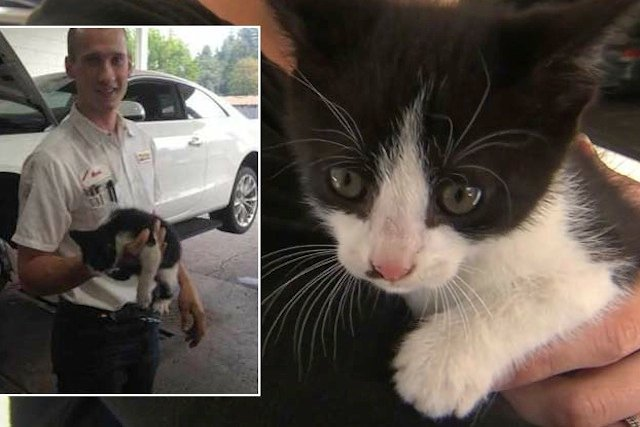 Cat Trapped in a Car Gets a Happy Ending