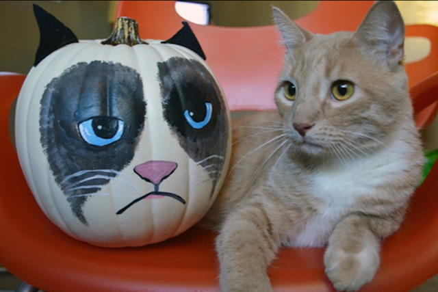 fccbfbddf Get Ready to Make a Cat Themed Jack-O-Lantern for Halloween!-Kittentoob