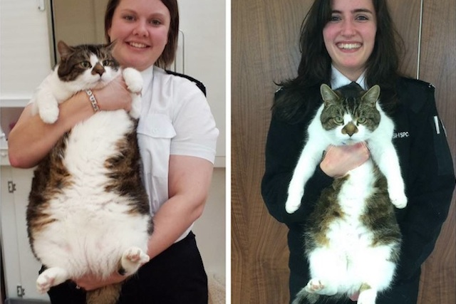 mr-pickles-before-after