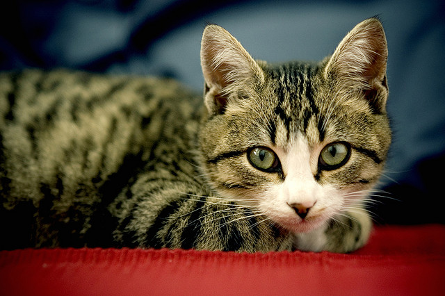Cats Could Warn Future Generations of Nuclear Danger