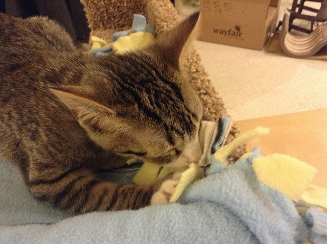 So Why do Cats Knead Blankets?