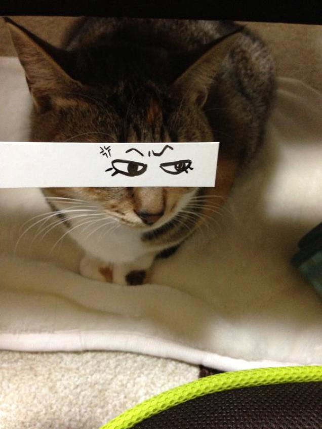 Fake Cartoon Eyes on Cats is Sweeping the Internet