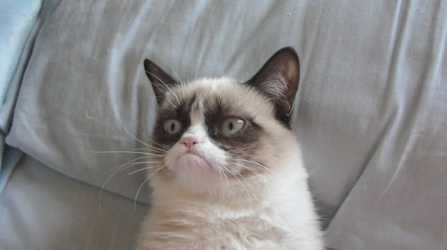 Grumpy Cat 640x359 five grumpy cat memes for the holiday season kittentoob
