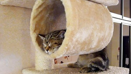 cats sleeping in cute and silly wayskittentoob