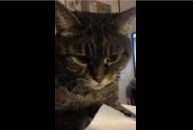 cat-upset-paper
