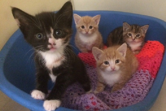 four-abandoned-kittens