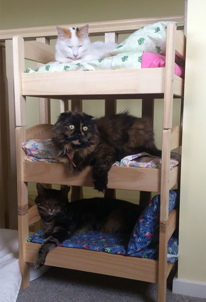 Ikea Beds Into The Cutest Cat