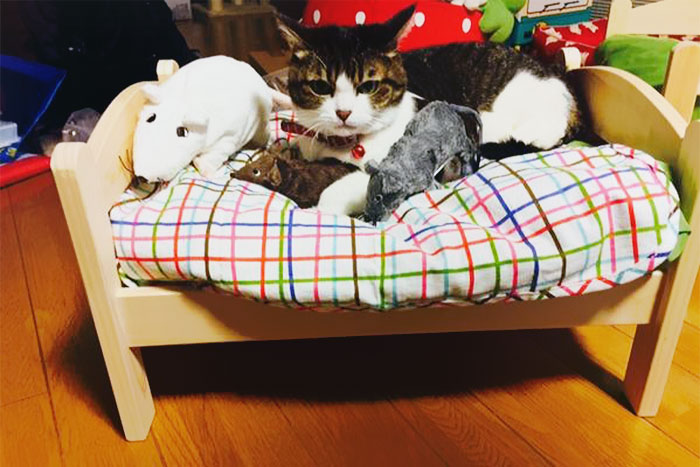 Watch Cat Owners Turn IKEA Beds Into The Cutest Cat Beds Ever!