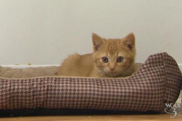 kitten-pickup