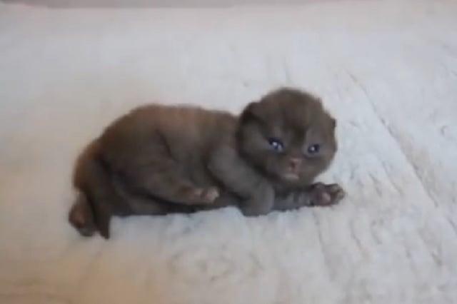 little-kitty