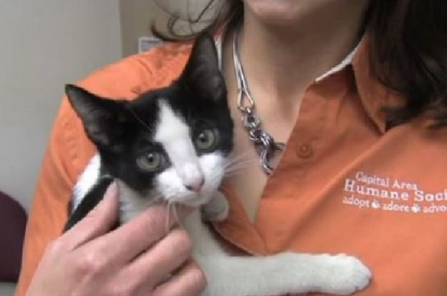 A Shelter Adopts a Policy that Saves the Lives of Cats
