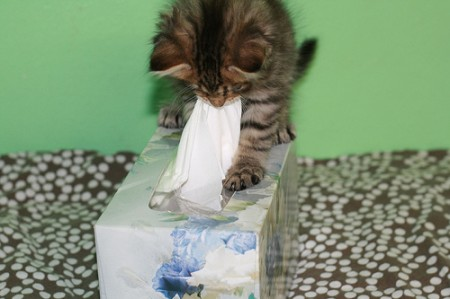 Reasons Your Cat May Be Sneezing A Lot