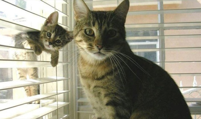 20 Cats Who Have Mastered the Art of the Photobomb