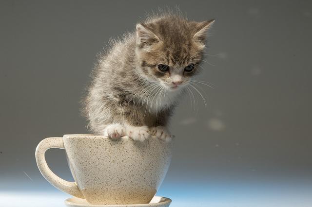 California Cafe Puts Cats Among Patrons to Spur Adoptions