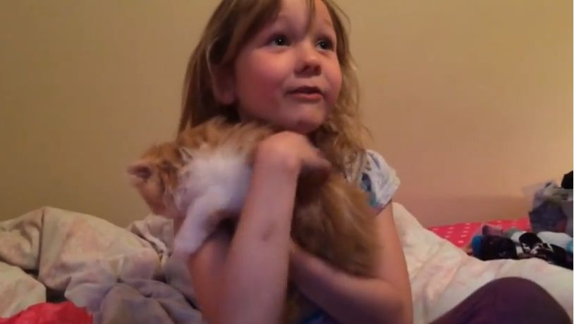 Parents Suprise Their Little Girl with a Persian Kitten and Her Reaction is Priceless