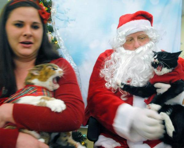 Woman Takes Her Cats to see Santa Claus and It Does Not go Well