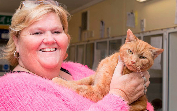 Missing Cat Garfield is Reunited with Owner after Being Lost for 7 Years