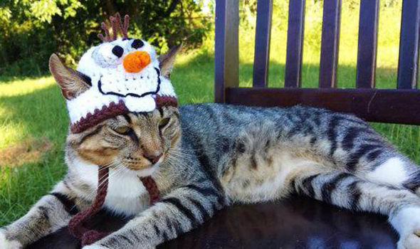 Is this the Purrfect Christmas Gift For Pets?