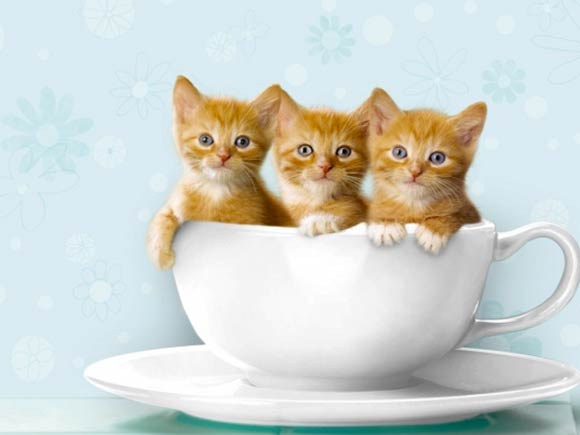 Cute Kitty in a Teacup is One Reason to Get up in the Morning!