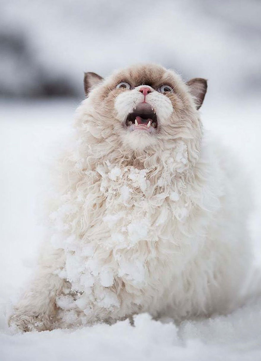 A Cat Sees Snow for the First Time