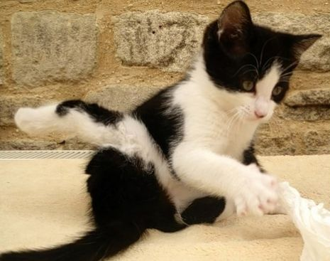 Kitten Born With Severe Leg Deformity Finds Forever Home