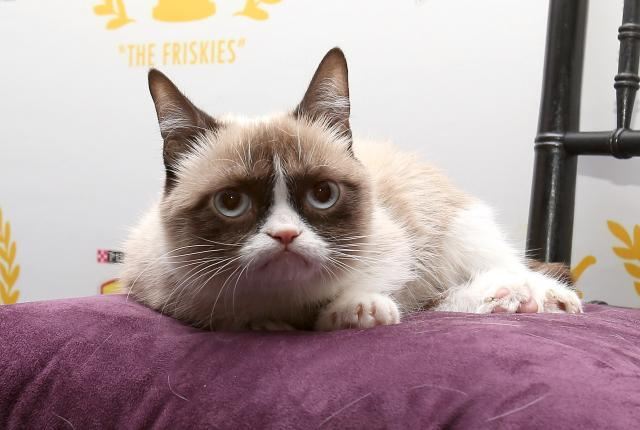 Grumpy Cat's Rise to Fame: Is Too Much Enough?