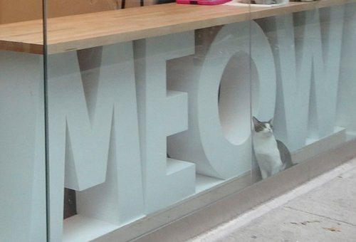 First Cat Spotted at Meow Parlour, NYC's First Cat Cafe