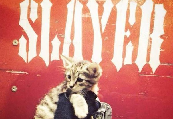 Metal Band Slayer Rescues Kitten Before a Show in Indianapolis