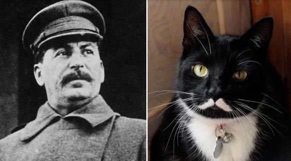 Meowseph Stalin Famous After Being Named for Ruthless Dictator