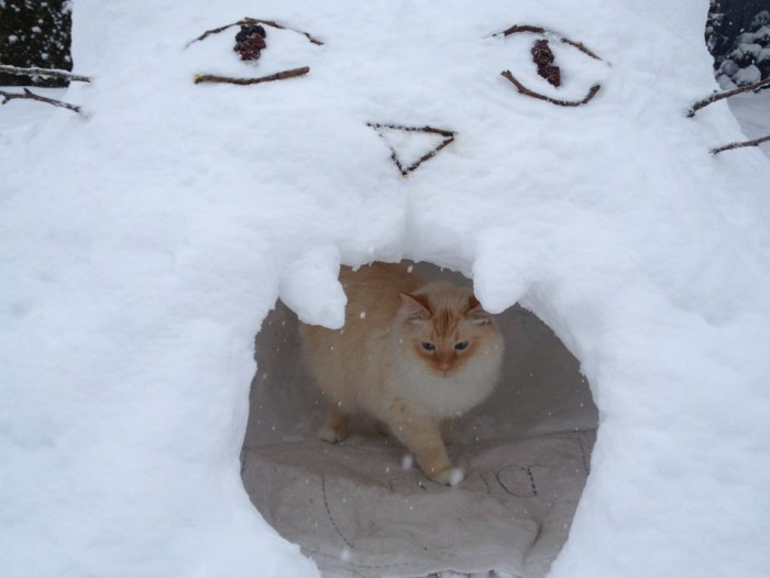 Adorable Cat Igloo Captures the Hearts of…..All of Us