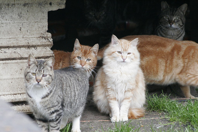 A Couple Spends Their Life Savings on Stray Cats