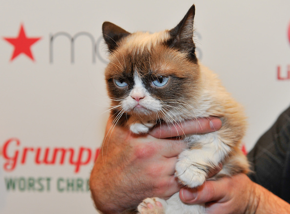 Grumpy Cat Flower Memes