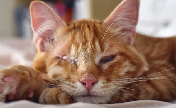 Abb the Cat Went Blind as a Kitten but has Found a Great Family