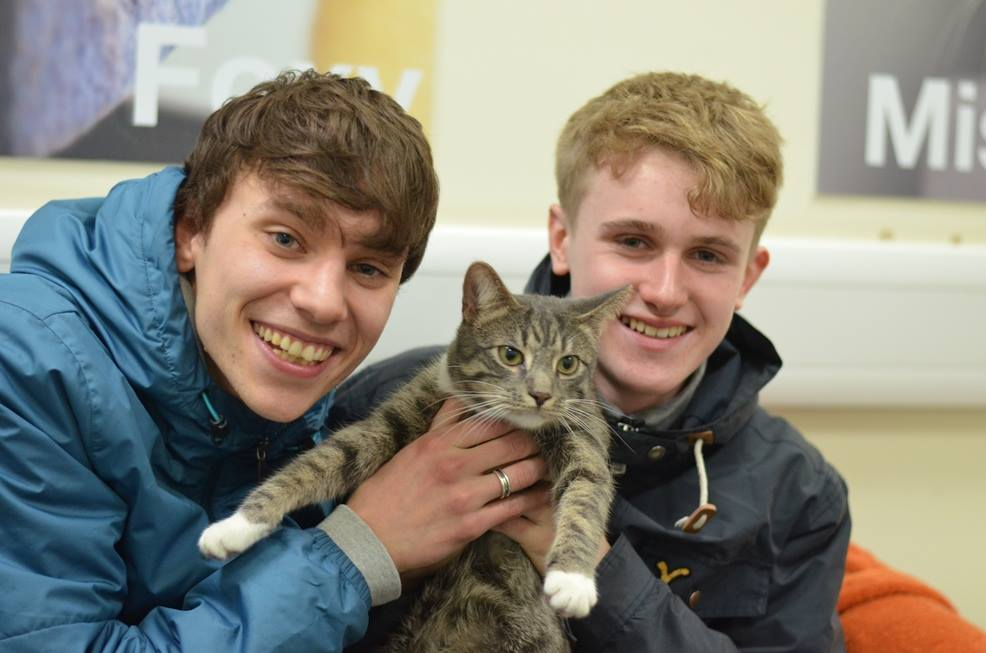 Missing Cat in the UK is Now Home after Being Found in a Telephone Box