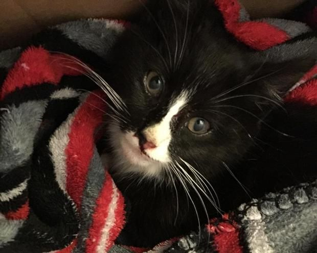 Community Helps Kitten Who was Hit by a Car